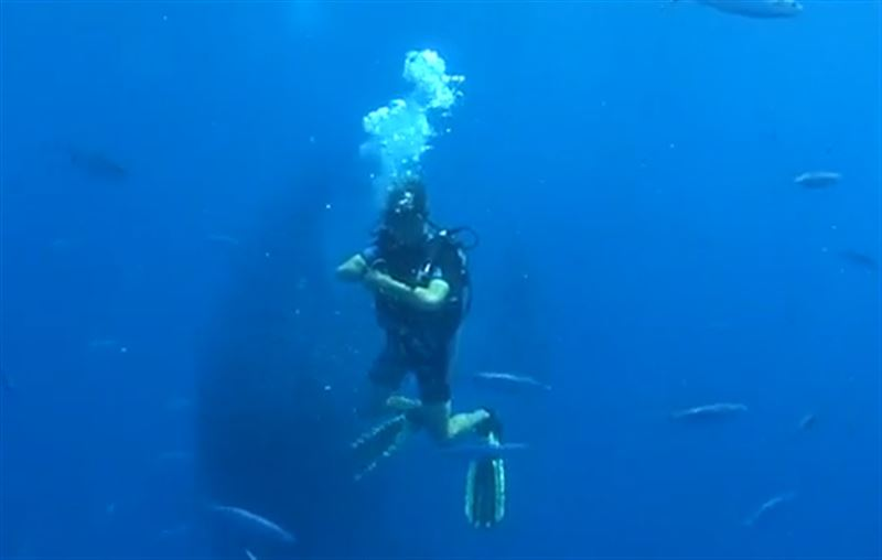 Чтобы спастись от акулы, тысячи рыб окружили дайвера