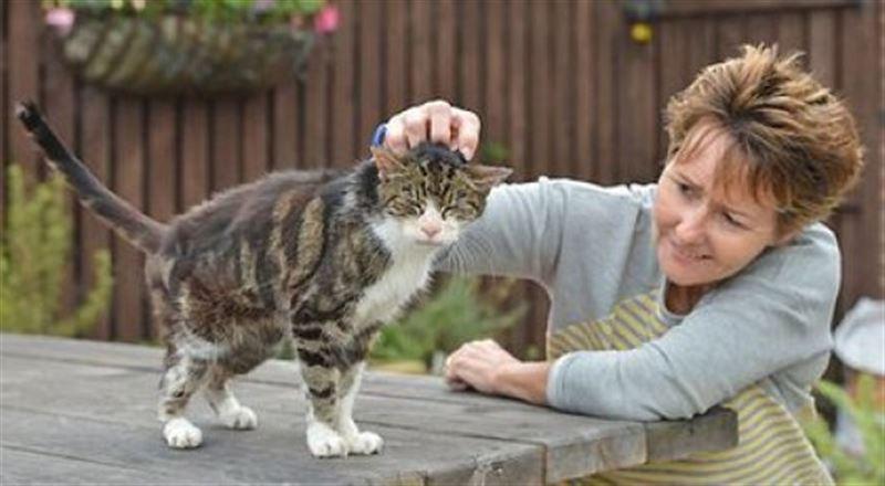 В Британии пропавшую 13 лет назад кошку вернули хозяйке