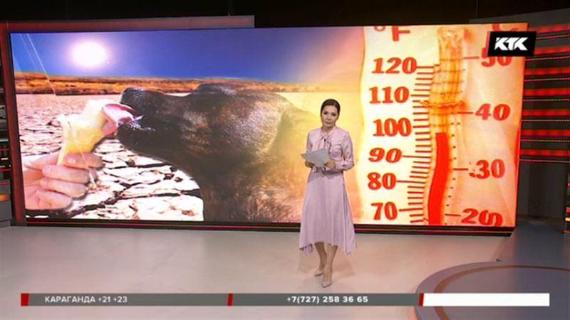 Термометры в Семее поднялись до 40 градусов