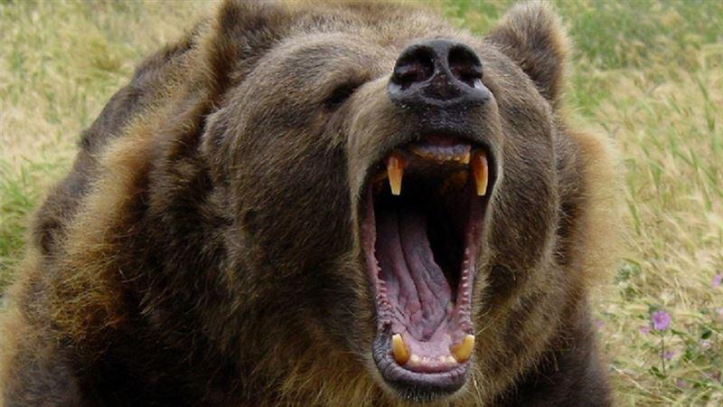 Медведь набросился на человека в Якутии