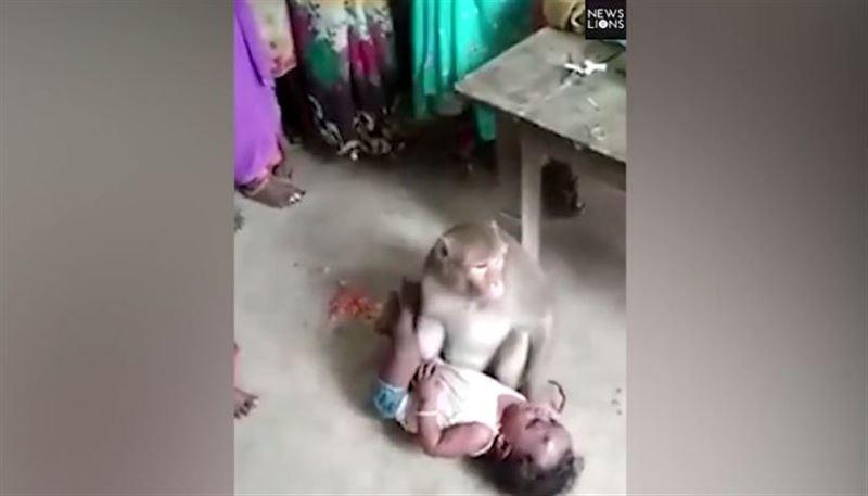 Обезьяна украла ребенка и не отдавала его матери