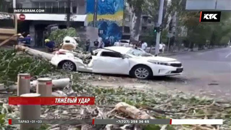 Алматинку прооперировали, после того как на ее авто рухнуло дерево