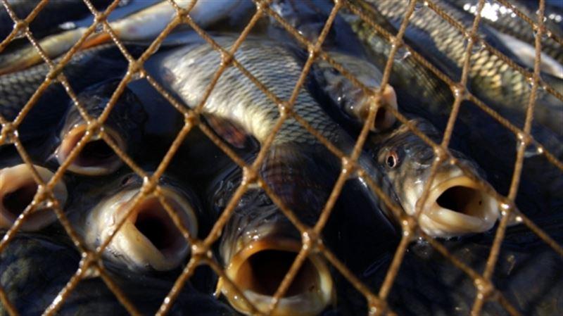 20 тонн леща и воблы не пропустили из Казахстана в Россию