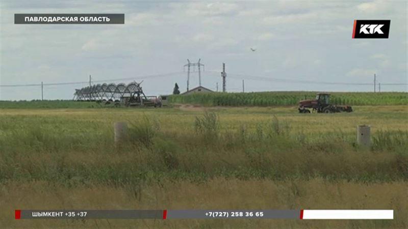 Крестьянам Павлодарской области негде пасти скот