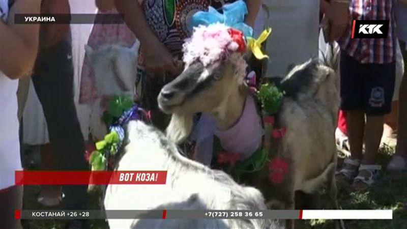 На Украине выбирали самую красивую козу