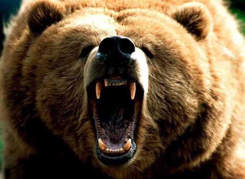 Медведь убил сотрудника заповедника на Камчатке