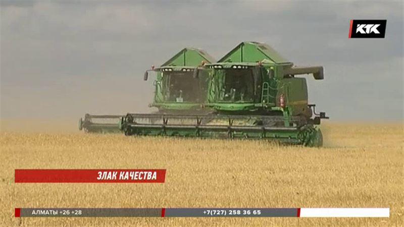 Цены на пшеницу растут – что будет с хлебом?