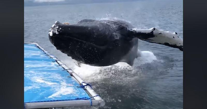 Туристер мінген қайық алып киттің астында қала жаздады