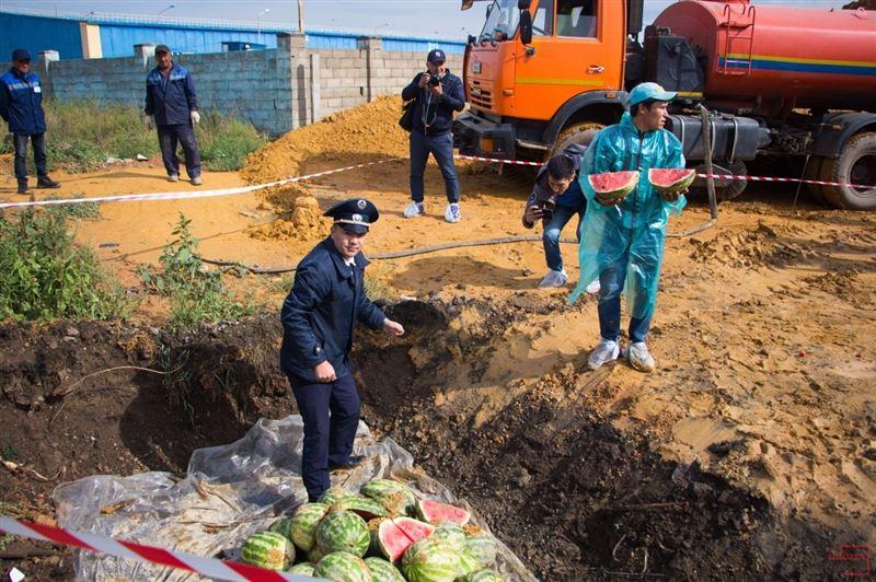 В Астане похоронили зараженные дынной мухой арбузы