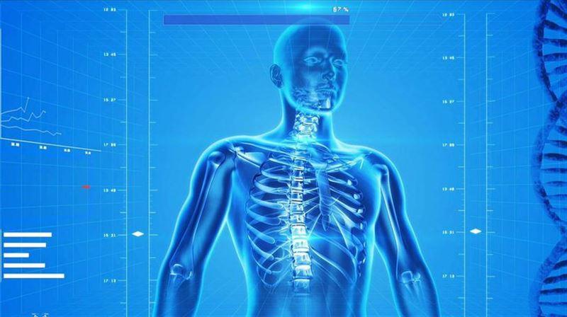 Ученые обнаружили новый орган в теле человека