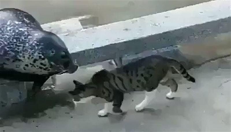 В Сети появилось видео стычки морского котика с домашним котом