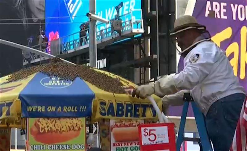 Тысячи пчел атаковали торговую палатку с хот-догами в Нью-Йорке