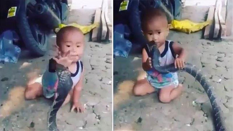 Ребенок играется с ядовитой змеей под смех взрослых