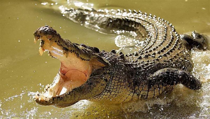 Женщину с младенцем оставили на съедение крокодилу