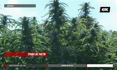 Конопля индийская лампы выращивания марихуаны купить