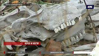 В центре Усть-Каменогорска обнаружили десятки черепов