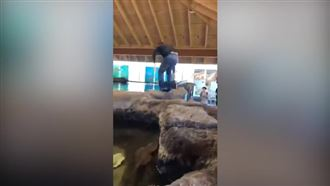 Бәстескен оқушы акула толы суға сүңгіп кетті