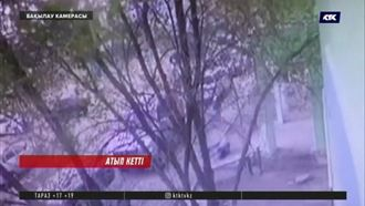 Атырауда тапа-тал түсте үйінің алдында адамды атып кетті