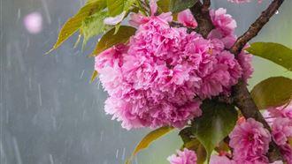 О погоде в Казахстане на 26 мая рассказали синоптики