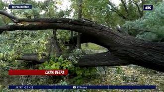 В СКО ураган повалил 20 деревьев и оставил людей без света