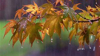 Прогноз погоды по Казахстану на субботу, 21 сентября