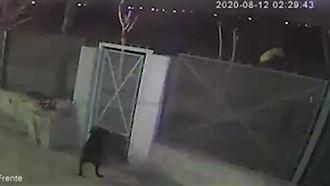 Мужчина выкинул в канаву мешок с телом своей девушки и попал на видео