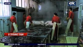 Падеж свиней на актюбинской ферме в пределах нормы – чиновники