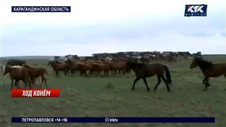 Пастухи распродали стада и заработали 174 миллиона