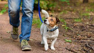 Более 1200 акмолинцев нарушили правила содержания и выгула собак