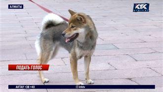 Владельцы собак возмущены запретом на выгул питомцев в центральном парке
